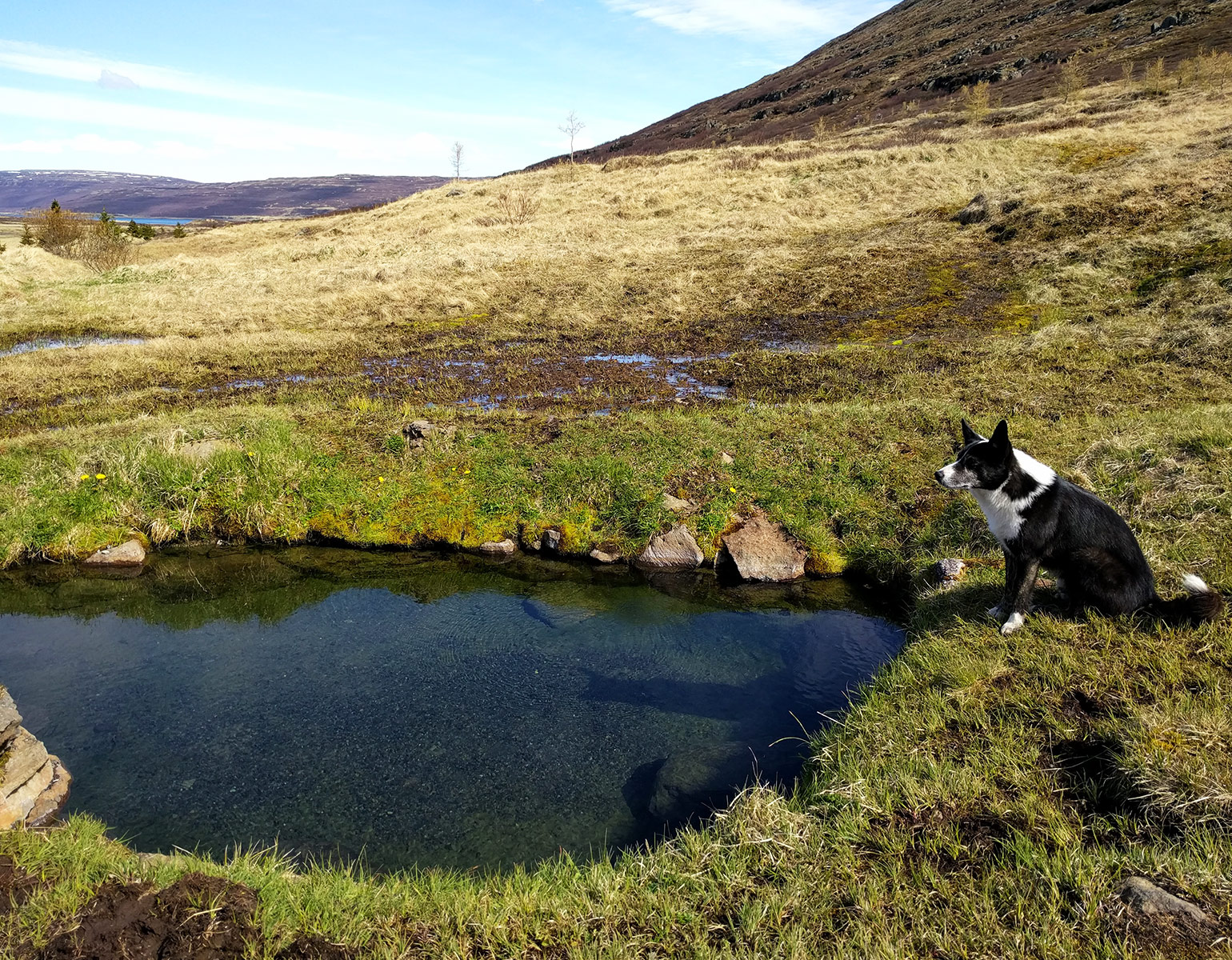 Hot Spring pool in the Westfjords, Iceland